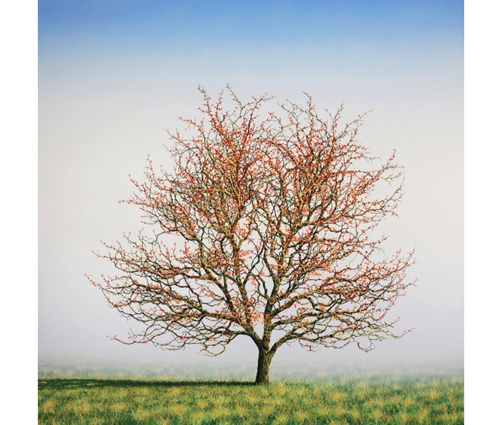 'May Tree' by Nigel Wood, represented by Turning Tides.