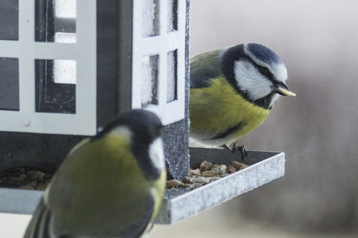 Feeding birds through Winter is a great way to help nature and in the summer they will return the favour by reduce the insects in your garden.