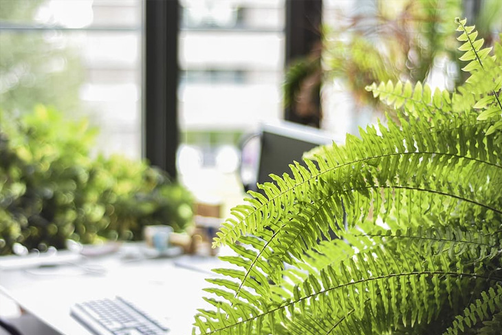 Use plants to enhance your work space.