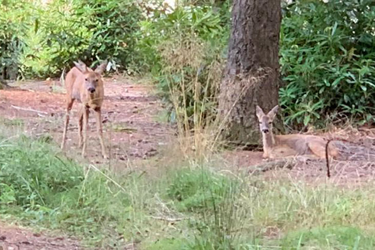 Centre Parcs is not just about activity and fun, it is really worth spending some quiet time outside to see the wildlife.