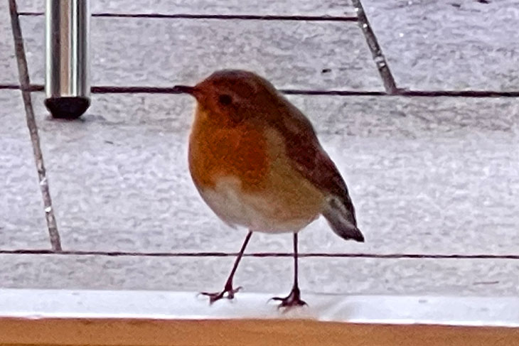 Our Christmas in September was even attended by a lovely, friendly robin.
